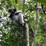 MADAGASCAR - ANDASIBE (3)