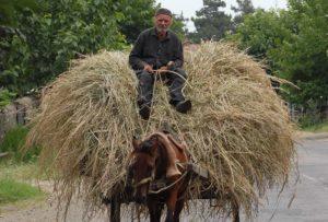 horse-riding-man-luca-gargano-1